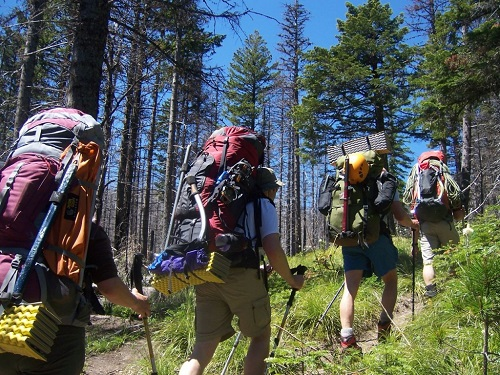 Four People Backpacking Through a Forest Path