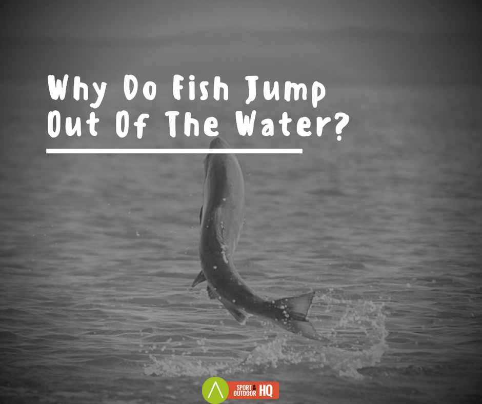 Why Do Fish Jump Out Of The Water?